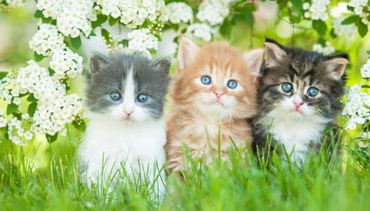Quanto conosci le razze dei gatti?