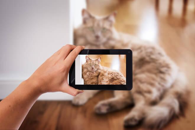 video-gatti-divertenti
