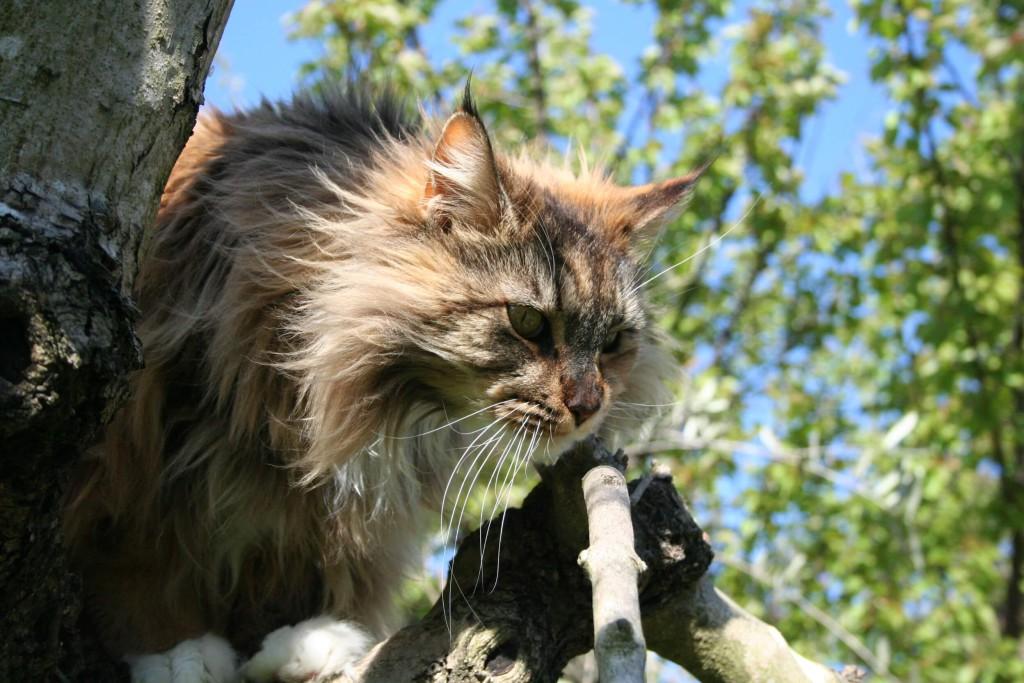 adozione consapevole di gatti
