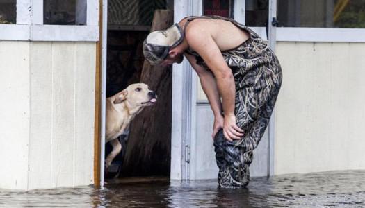 Il cane Lucky salvato dall'alluvione in Sud Carolina