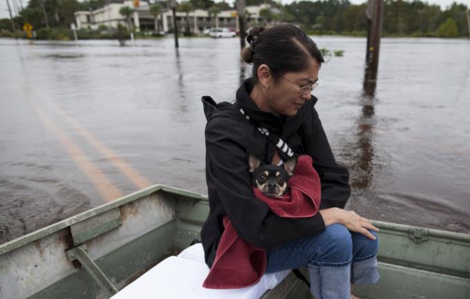 Il cane Lucky salvato da alluvione 3