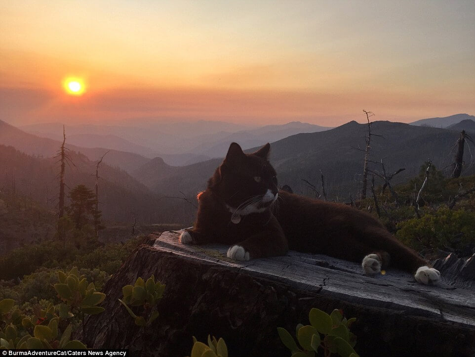 The_original_adventure_cat_settles_down_at_sunset_in_Oregon_afte
