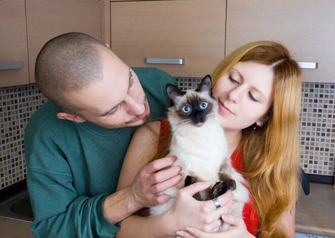 adozione-di-gatti-famiglia