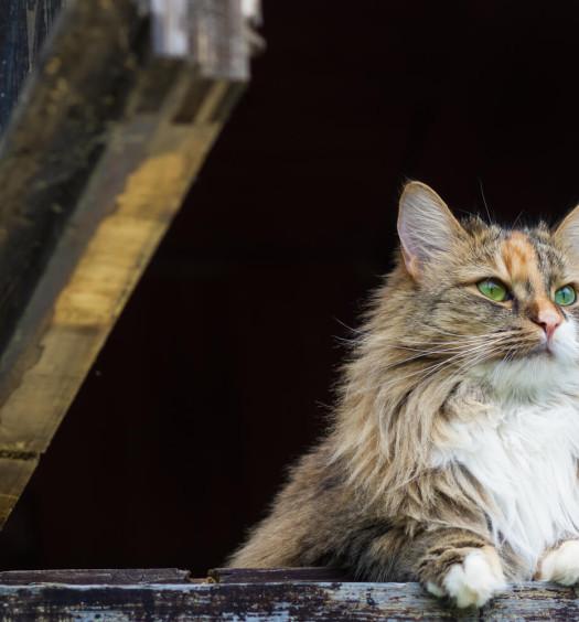 adozione di gatti parte seconda