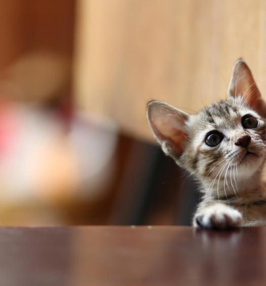 adozioni di gatti parte prima