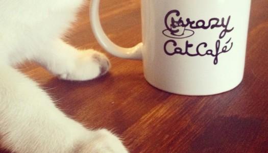 """Apre a Milano il """"bar dei gatti"""": un locale dove poter bere un caffè mentre si accarezza un micio"""