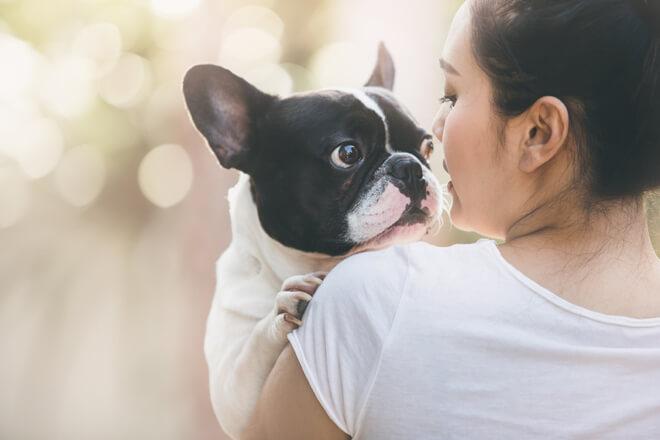 Bulldog Francese amore