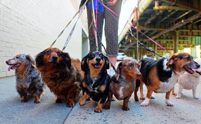 cani estero numero massimo