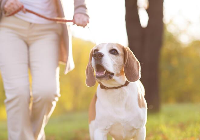 cane obeso attività fisica