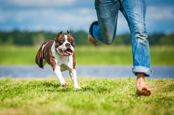 linguaggio-cane-corsa