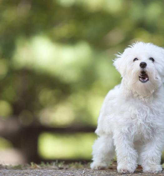 linguaggio del cane parte 1