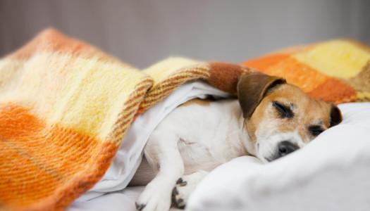 Parassiti intestinali del cane: le tipologie più frequenti