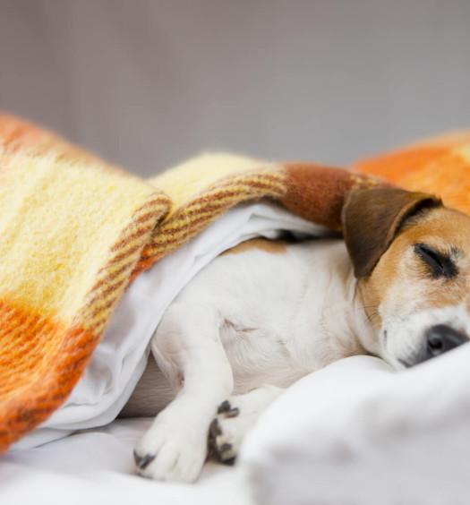 parassitosi intestinale cane