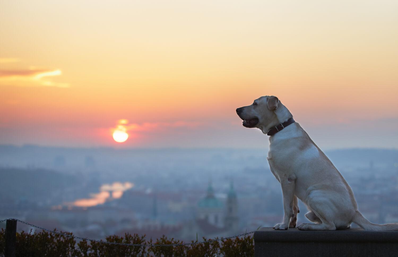 Vacanze con il cane all'estero