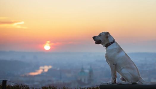 Vacanze con il cane… all'estero!