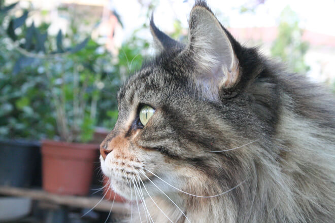 baffi del gatto