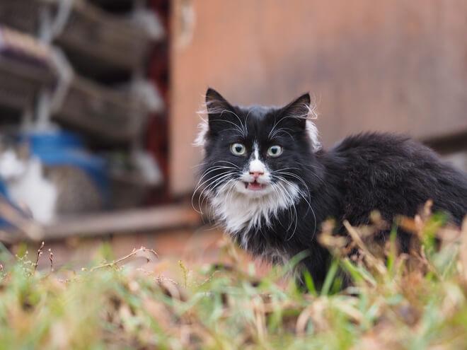 gatto che fa i bisogni all'aperto