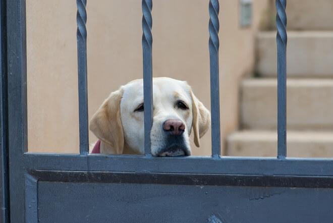 Cane solo dietro al cancello