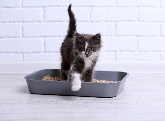 Come scegliere la lettiera per gatti?