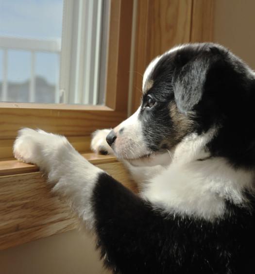 cane da solo