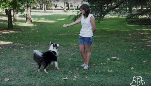 Educare il cane: Chiedere un Oggetto