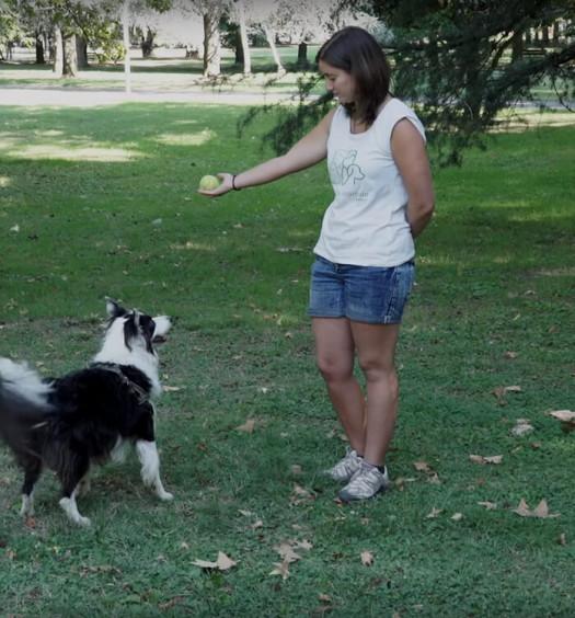 educare un cane chiedere un oggetto