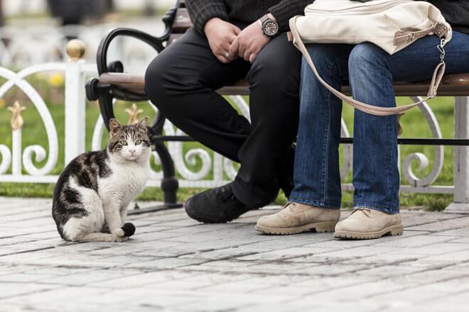 Gatti istanbul convivenza con le persone