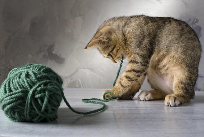 Giochi per il gattino: il filo