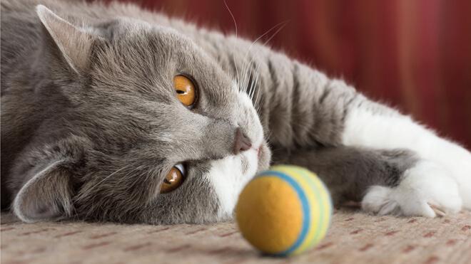 Giochi per gattino: la pallina