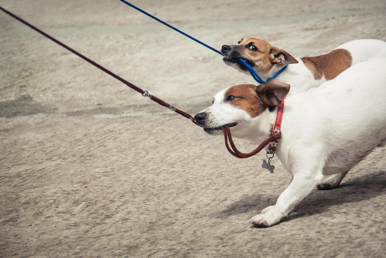 guinzagli per cani