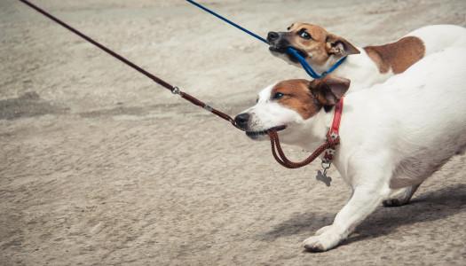 Guinzaglio per cani: fino a che punto limitare la sua libertà?