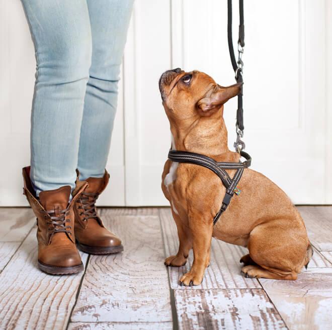 guinzaglio cane e padrone