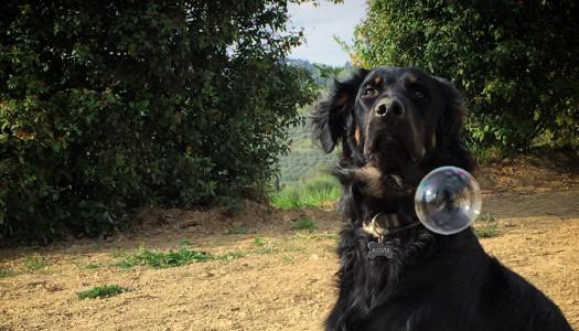 """Cani disabili: la mia vita con un """"diversamente cane"""""""