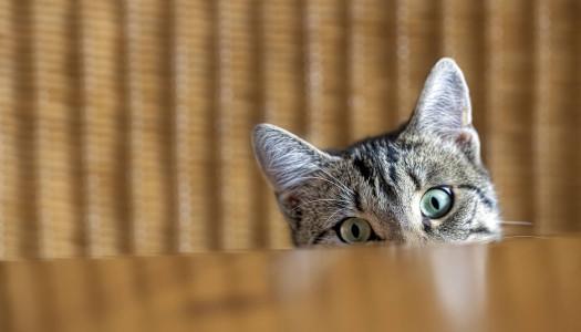 3 regole per far ambientare il gatto in casa