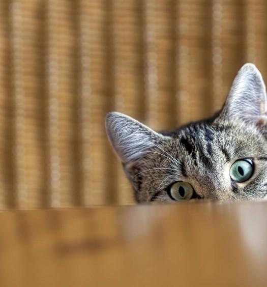 La guida del gattino