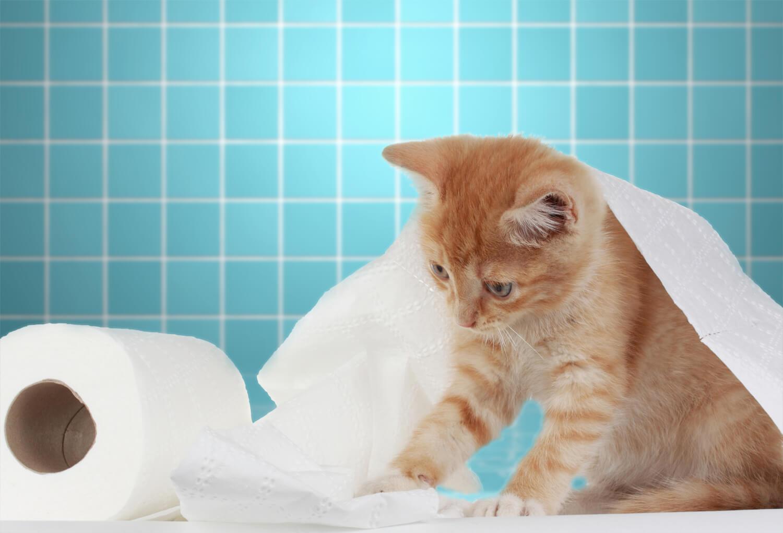 Lettiera per gatti e mici