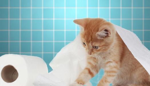 Lettiera e gatti: un equilibrio delicato