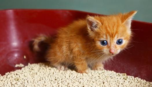1, 10, 100 lettiere per gatti… come scegliere?