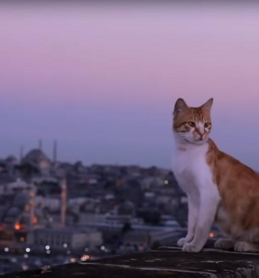 Nine lives: svelati i segreti dei gatti di città