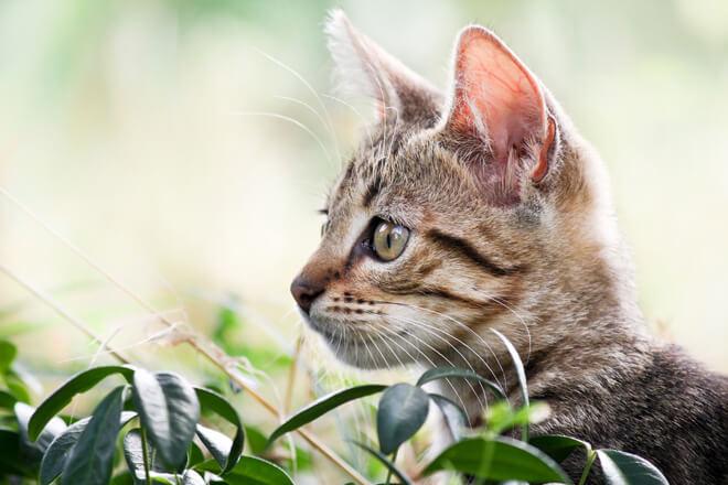 Nine lives comportamento dei gatti