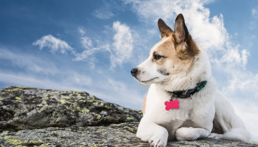 Nomi per cani: consigli e idee per scegliere per il nome del tuo cucciolo