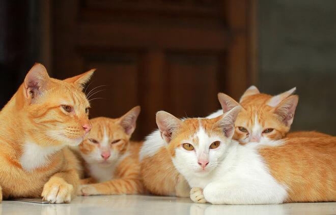 Più gatti più lettiere