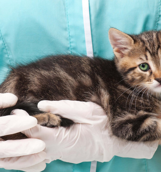 Le prime cure del gattino