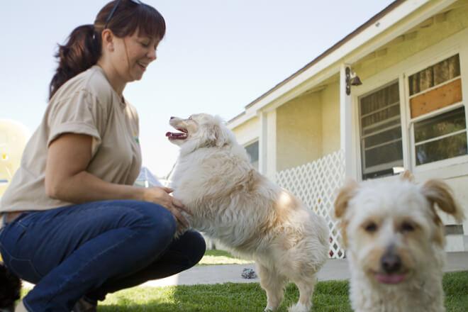5-consigli-per-lasciare-il-cane-in-una-pensione-per-cani (1)