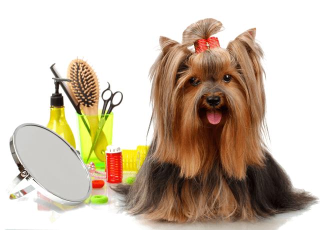 attrezzatura toelettatura cani