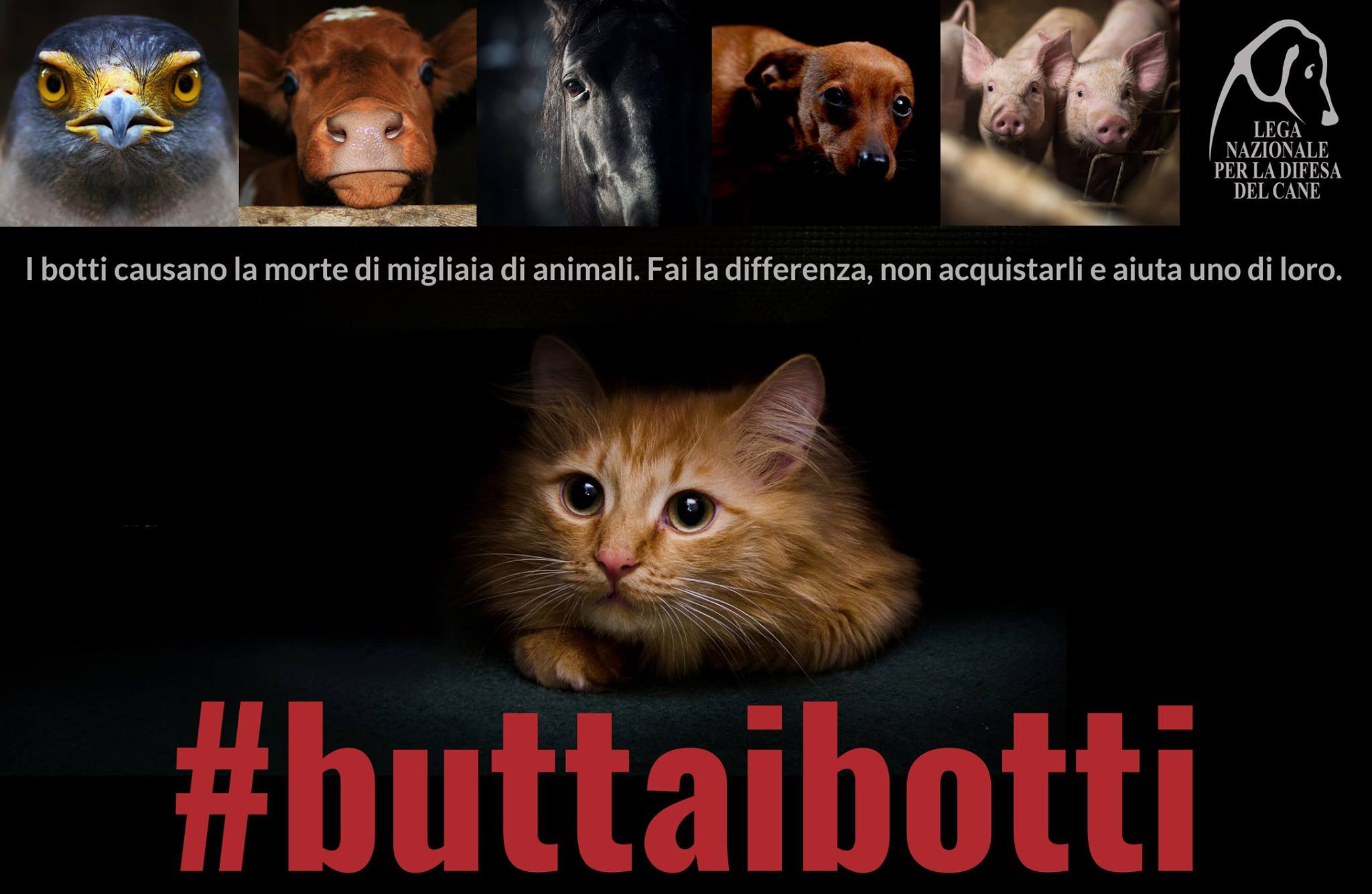 #buttaibotti gatto