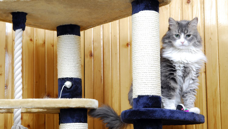 Casa a misura di gatto