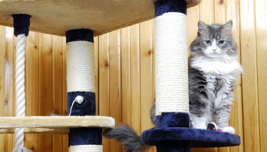 """10 regole per una casa """"a misura di gatto"""""""