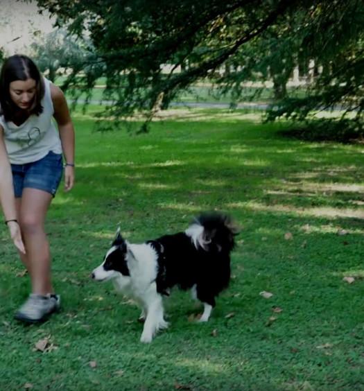 educare il cane: il luring