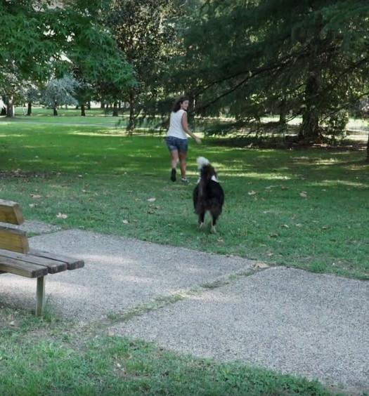 educare il cane: il richiamo